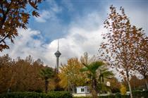 هرس ۱۵ هزار اصله درخت در قلب تهران