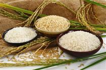عرضه برنج خارجی در کیسه ایرانی/کشاورز: آمار تولید و کسری برنج وزارتخانه صحیح نیست