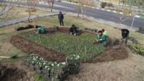 کاشت ۵ هزار گل لاله در میدان ولیعصر (عج)