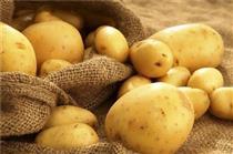 صادرات سیبزمینی بدون پرداخت عوارض